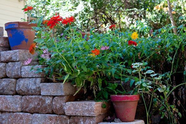 fall-garden-8983