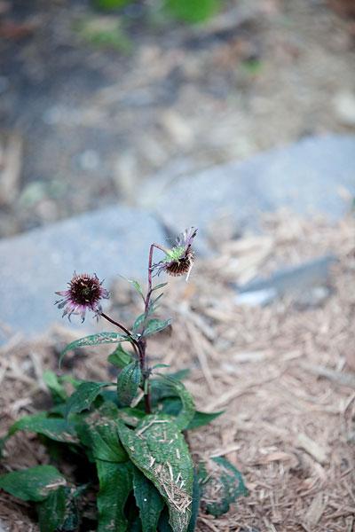flowers-8791