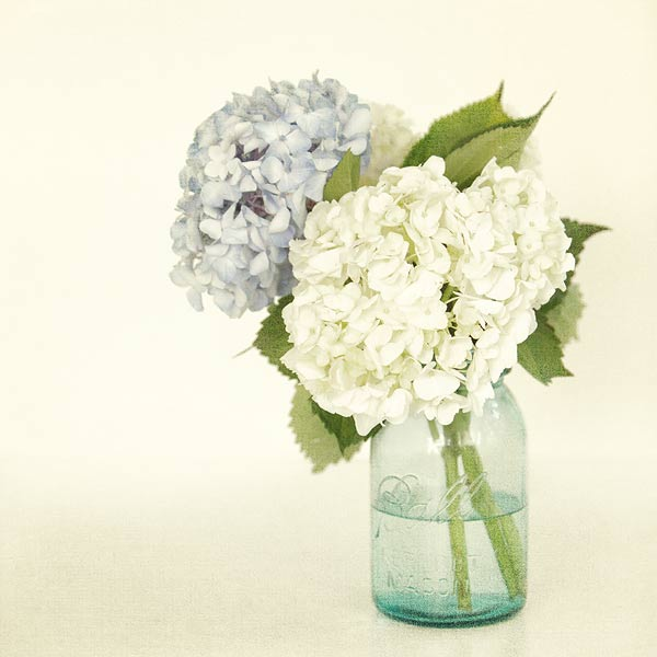 hydrangeas in mason jar