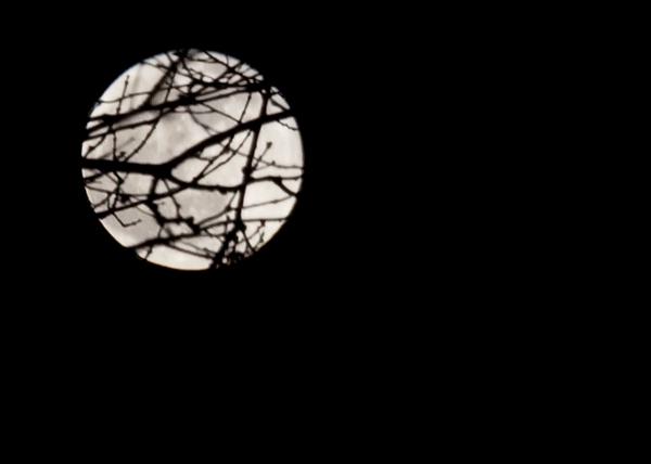 full-moon-3590