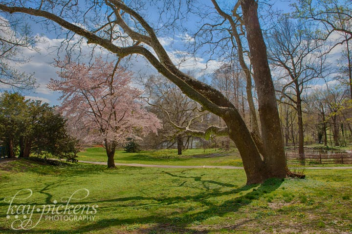 Haverford College Trees