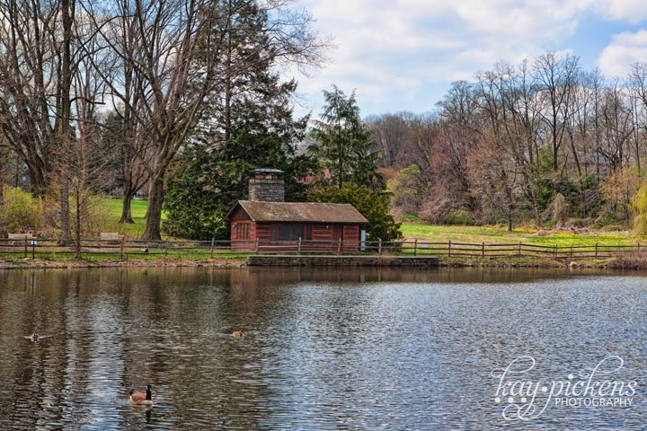 Haverford Duck Pond