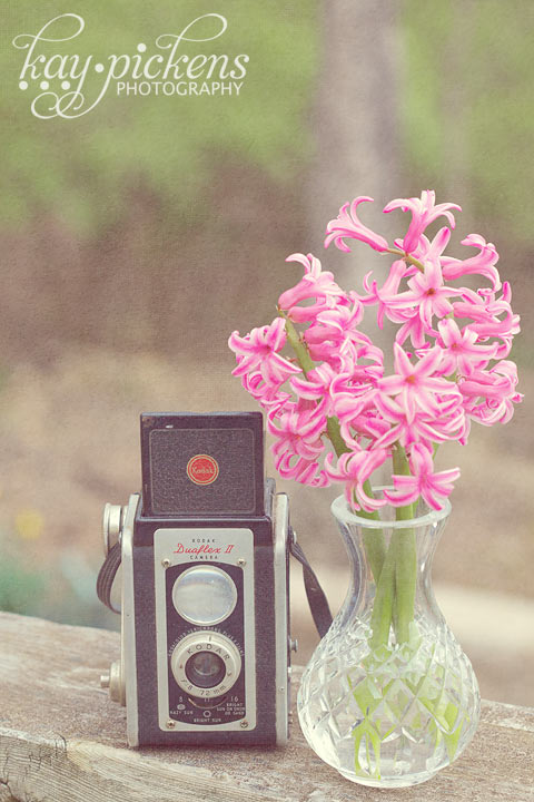 camera and flowers in vase