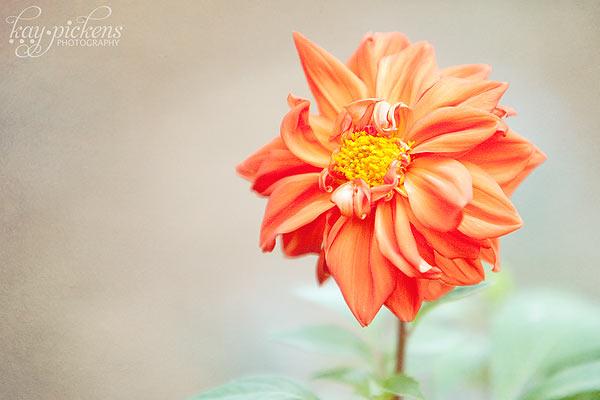 orange-flower-8793