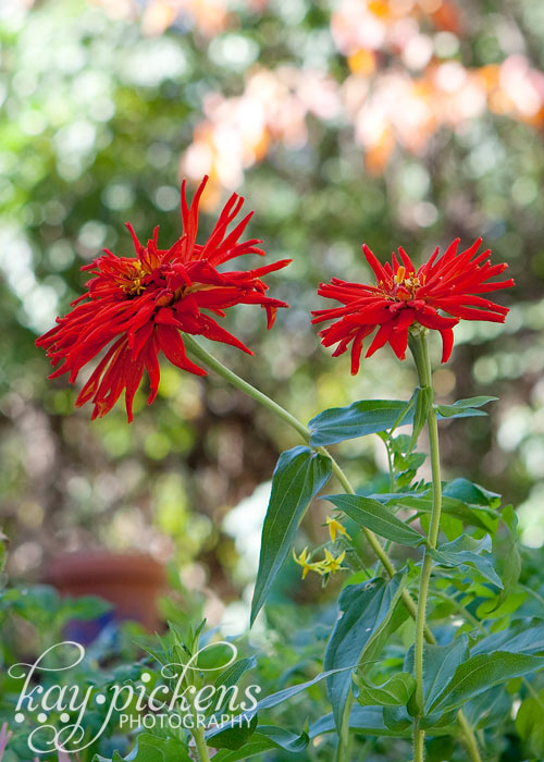 orange-flower-8984