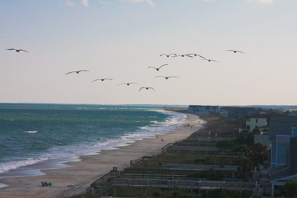 pelicans flying on the beach