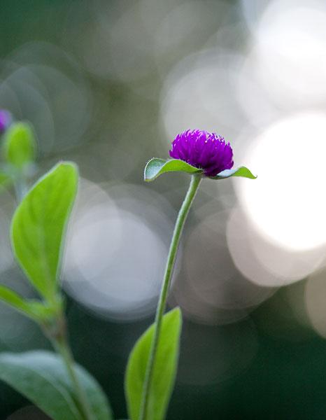 purple-bokeh-7949