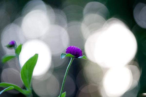 purple-bokeh-7953