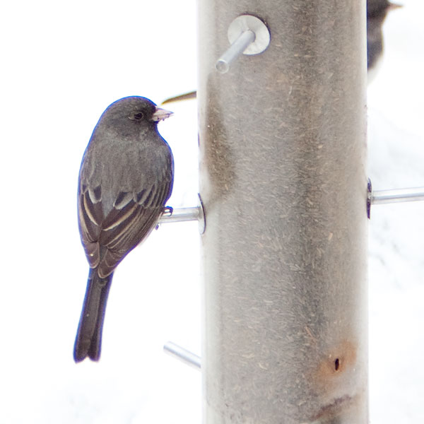 chromatic abberation on bird in the snow