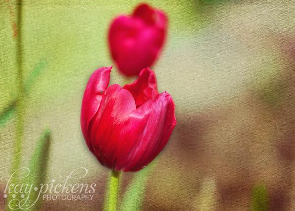 red-flower-6589