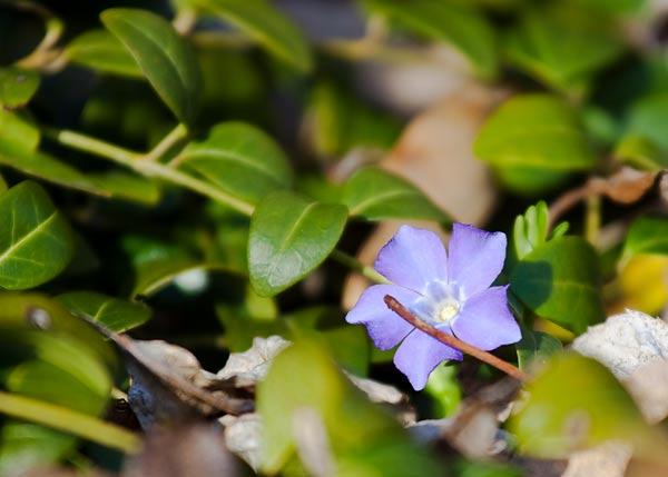 spring-scenes-5964