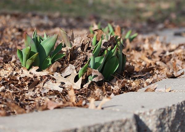 spring-scenes-5969