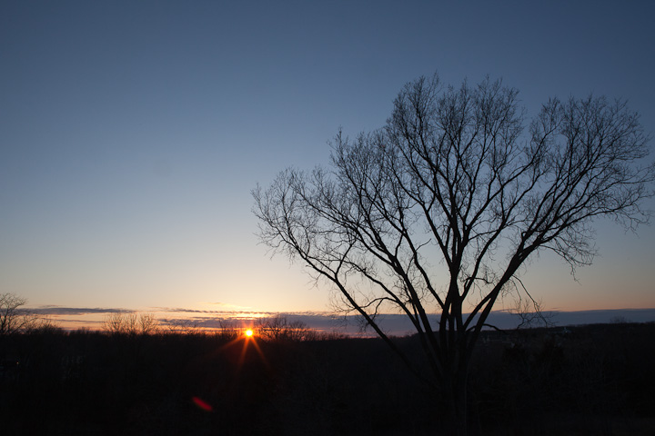 sunset with sun flair in Columbia MO with elm tree silhouette
