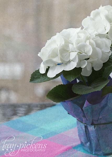 winter-flowers-4650